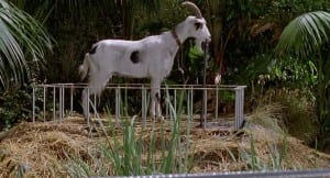 Where's The Goat