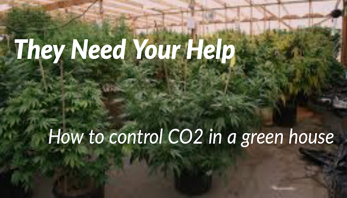 Need to Monitor CO2 in Greenhouses? Here is how to do it!